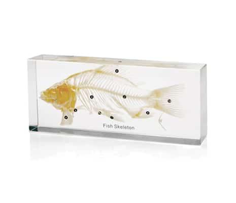 โครงกระดูกปลา ในเรซิ่น