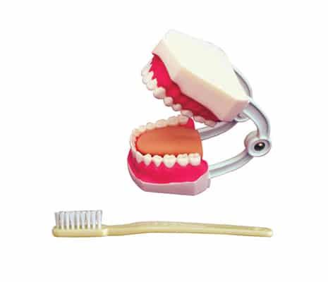 หุ่นจำลองฟัน 32 ซี่