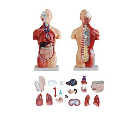 หุ่นจำลองร่างกายมนุษย์ 42 ซม. (18 ชิ้น)