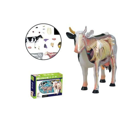 4D Vision หุ่นจำลองวัว