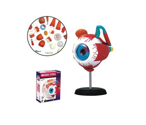 4D Vision หุ่นจำลองตา