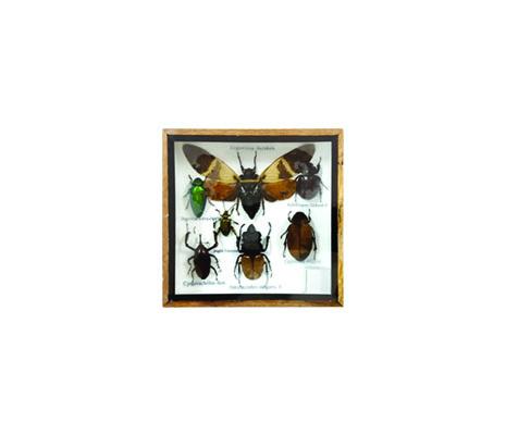 กล่องตัวอย่างแมลงสต๊าฟ S