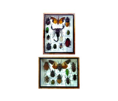 กล่องตัวอย่างแมลงสต๊าฟ M